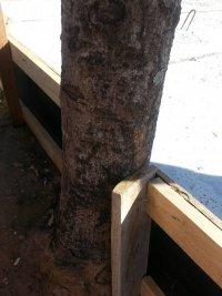 poderiam ter feito a escora na madeira e não na árvore