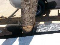 seria tão necessário ferir a árvore?