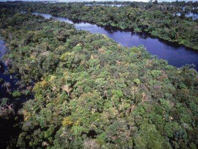 Amazônia: incêndios e estresse hídrico reduzem ação de sumidouro da maior floresta tropical