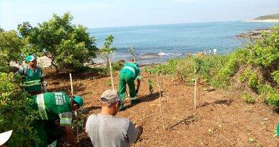 Homens trabalham no plantio de espécies nativas na Praia de Areias Negras
