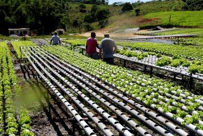 Hidroponia (do grego: água + trabalho) é um sistema de cultivo de plantas caracterizado por não precisar de terra (solo
