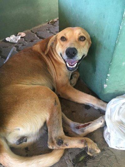 Vítima de abandono o cão sofreu acidente e está no IFF