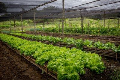 Os agricultores que participam das chamadas podem ser integrantes de cooperativas, associações ou apresentar o próprio CPF