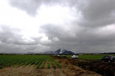 Com 800 ha de área plantada com feijão preto, as fazendas BJ Agropecuária (Antiga IIha da Saudade) e Primos Ipanema Agropecuária geram, juntas, cerca de 450 toneladas das variedade