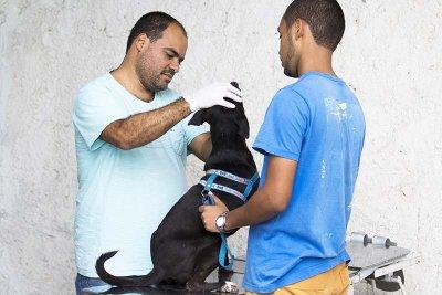 Programa de castração de cães e gatos amplia cadastramento