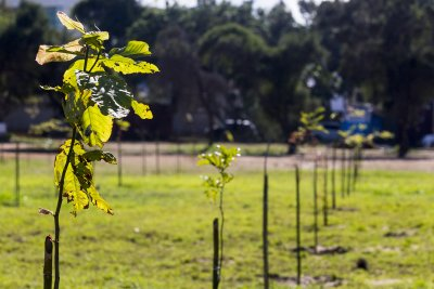 O bosque também vai receber mudas de árvores nativas da mata atlântica