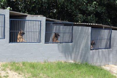 O Grupamento de Operações com Cães é composto por nove cães, sendo seis do trabalho para proteção e controle de distúrbios, e três para faro de entorpecentes, armas e munições