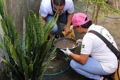 A orientação é manter os quintais sempre limpos, recolher, eliminar ou guardar longe da chuva todo objeto que possa acumular água