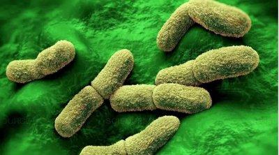 Alerta: Peste bubônica volta da idade média e pode dizimar a humanidade
