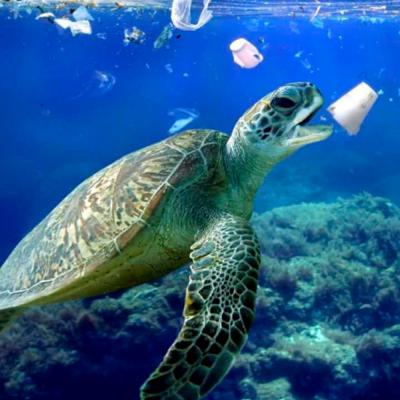 Todo resíduo descartado de forma irregular causa inúmeras conseqüências para a vida marinha