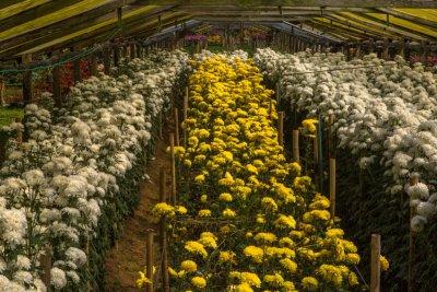 O Estado do Rio de Janeiro é o 2º maior produtor do país de flores