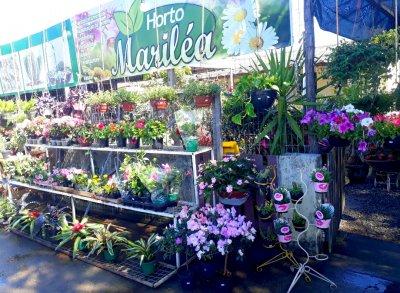 O horto se surpreendeu com o aumento da procura por plantas após a reabertura do comércio