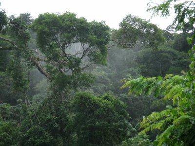 Rebio União tem 7.756,76 hectares e abrange terras de Macaé, Rio das Ostras e Casimiro de Abreu